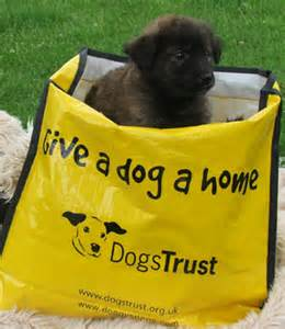 Dog tales the dogs trust will host this storytelling and crafts