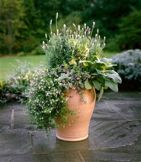 p allen smith container gardens 17 best images about potted plants on the
