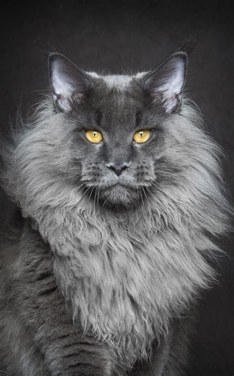 19 best images about Cats on Pinterest   Cats, Mondays and