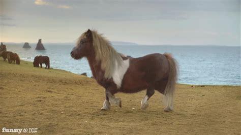 mini pony mini pony moonwalks from tubulargoldmine