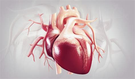 mending  heart  living nanogels asian scientist