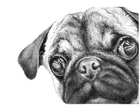 cool drawings of pugs pug drawing etsy