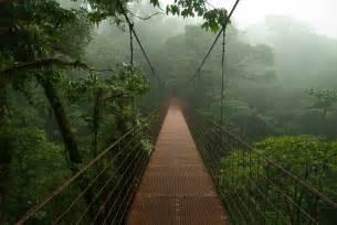 Canopy Fogging Definition by Monteverde Fragments