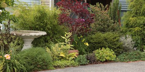 small shrub for border small shrub for border gardens evergreen borders for small plants