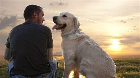 pets best friend 5 heartwarming stories that prove is s best friend