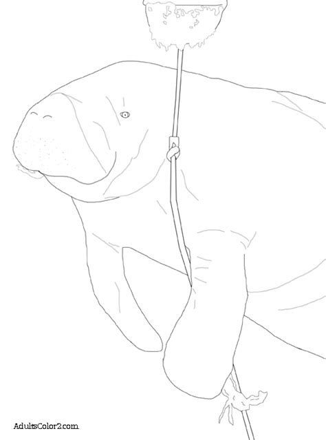 sea cow coloring page manatee pictures sea cow coloring page