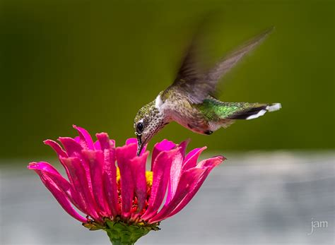 best 28 how much does a hummingbird eat per day fun