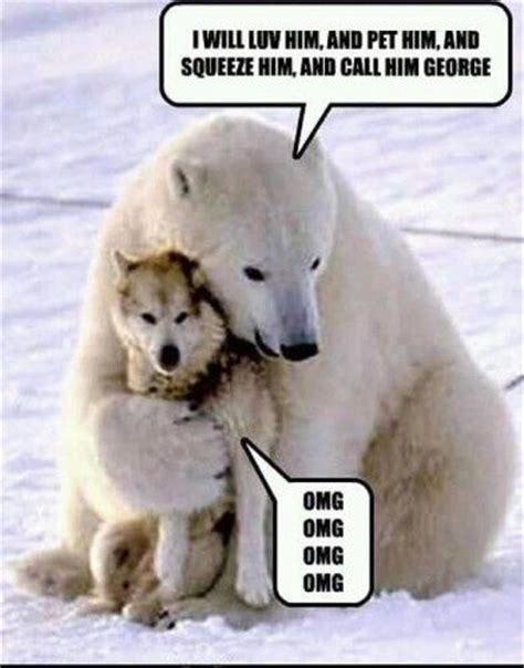 Meme Bear - polar bear funny memes