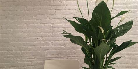 plantes d int 233 rieur et plantes vertes entretien culture