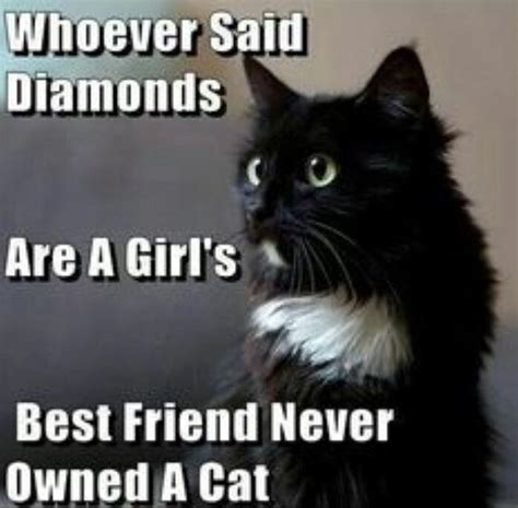 Funny Cat Lady Memes - 17 best black cat quotes on pinterest happy halloween