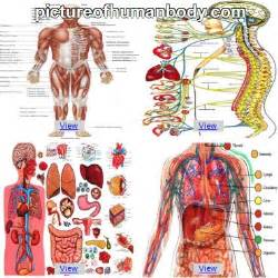 The body picture human body organs the human body human body for kids