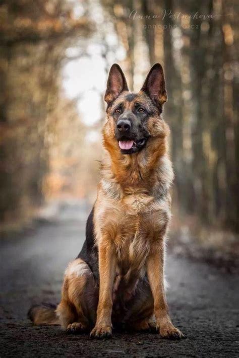 top 5 smartest dogs top 5 smartest breeds interesting