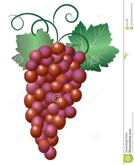 imagenes de uvas vector uvas fotos de stock imagem 3513983