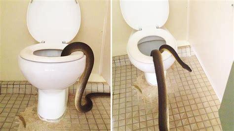 bathroom snake giant snake found inside national park toilet