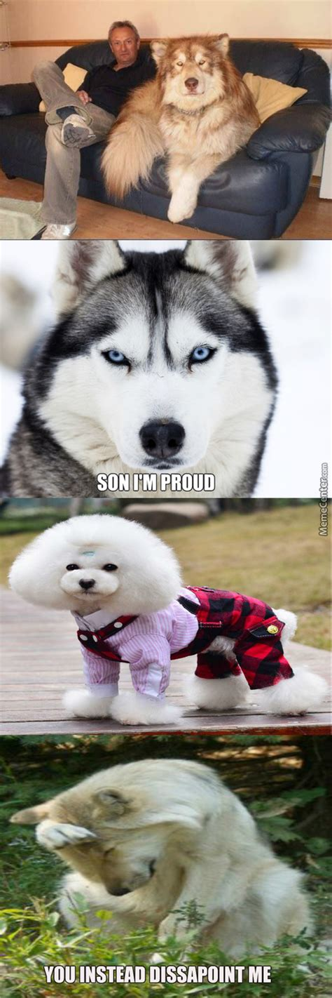puppy everywhere memes best collection of pictures