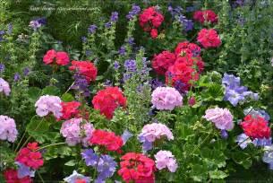 fleurs plantes et jardins photos obasinc