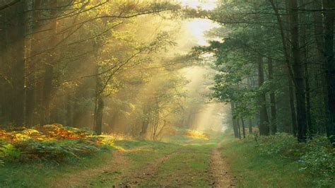 roads path trail tracks nature landscapes trees forest plants leaves sunlight sunbeam