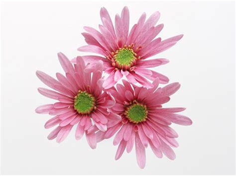 pink flower weneedfun