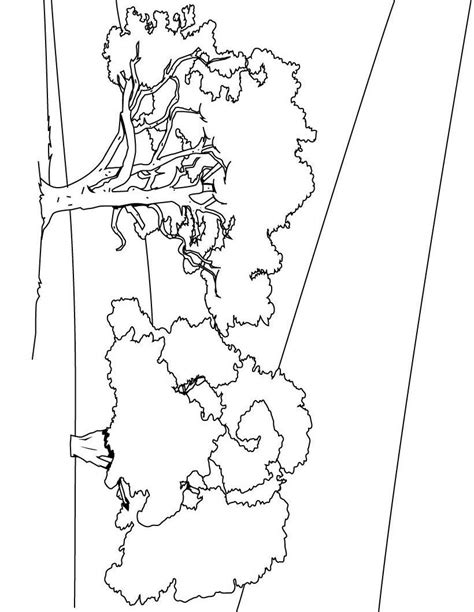 trees more coloring book books tree coloring pages coloring pages to print