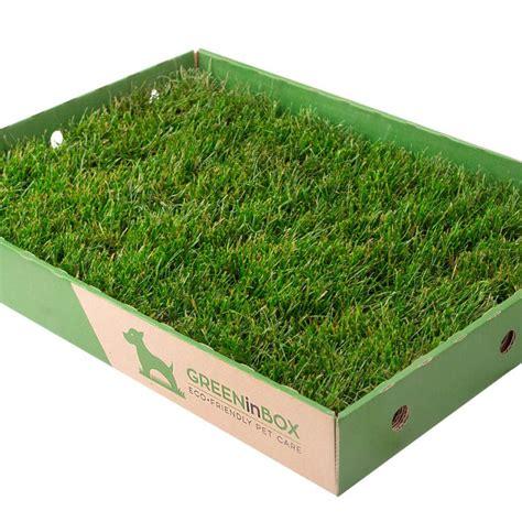 tappeto erba vera greeninbox greeninbox