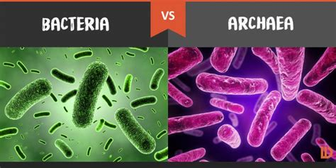 Electrical Accessories by Bacteria Vs Archaea What S The Difference Difference Wiki