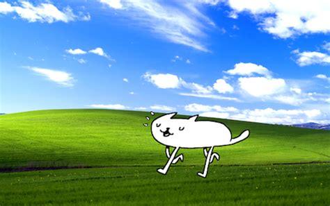 broken microsoft windows xp bliss wallpaper know your meme cat microsoft windows xp bliss wallpaper know your meme
