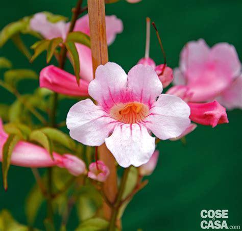 fiori autunnali i fiori autunnali scelti per voi