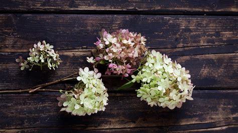 hübsche gärten hortensien trocknen h 252 bsche tischdeko selber machen