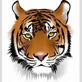 Tiger Head Clip Art Free to use & public domain tiger clip art