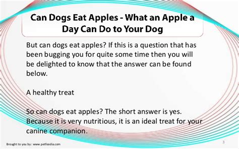 can dogs eat apples can dogs eat apples what an apple a day can do to your