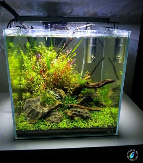 design aquarium nano 872 best aquascaping planted tanks aquariums images on