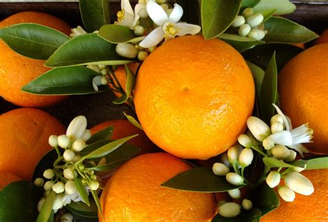 fiori d bouquet con fiori d arancio gli accostamenti pi 249 belli