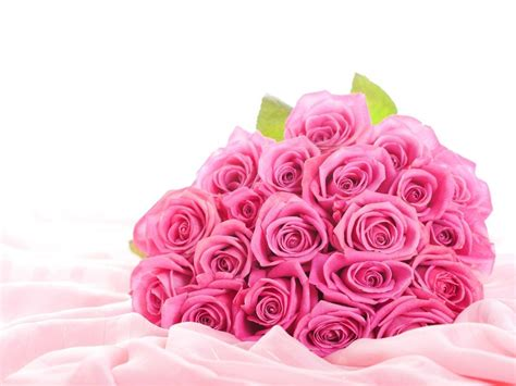 wallpaper cute rose pink rose wallpapers wallpaper cave