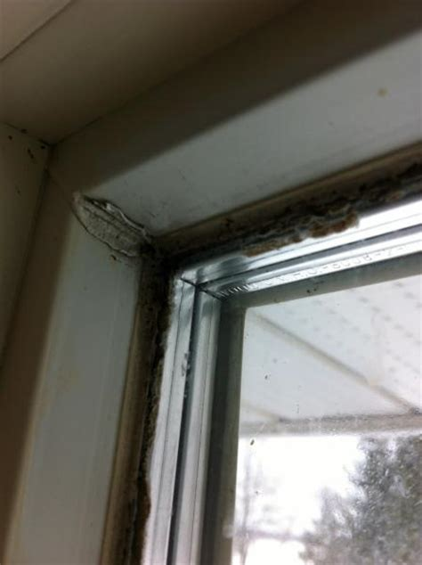 Mould Growing On Windows Designs Windows Mold Keeps Growing Seal Broken And Condensation Problems Doityourself Community
