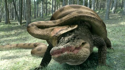 win lake placid  anaconda  dvd