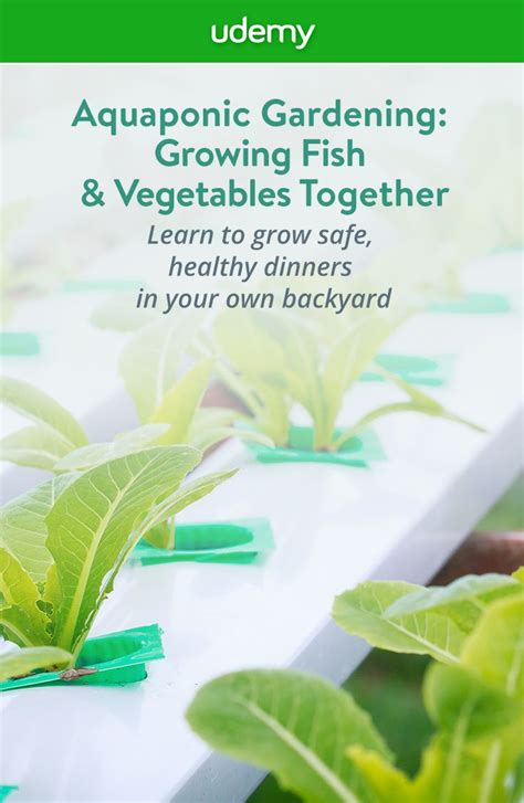 right in your own backyard grow safe healthy fish and organic vegetables with no