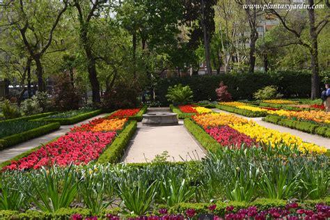 imagenes de jardines botánicos tulipas o tulipanes clasificaci 243 n plantas jard 237 n
