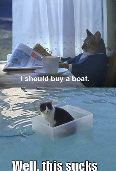 I Should Buy A Boat Cat Meme - 20 funny animal pictures and awesomeness kill the hydra