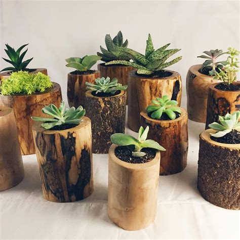 succulents planters 25 best ideas about succulent plants on pinterest