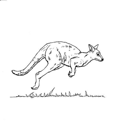 kangaroo coloring pages getcoloringpagescom