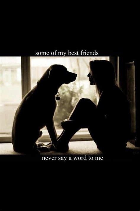 Easy Friends Cat Op11011 21 best 25 labrador quotes ideas on pet quotes