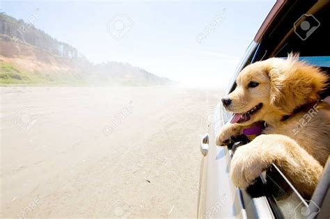 traveling with dogs traveling with your pet valley veterinary hospital