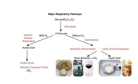 carbon dioxide in cottage cheese anaerobic respiration atp new fuels and yogurt without