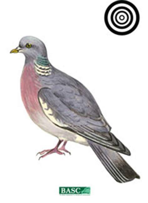printable pigeon targets basc air gun targets