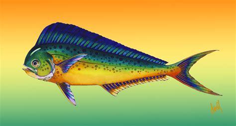 mahi mahi images mahi mahi fish
