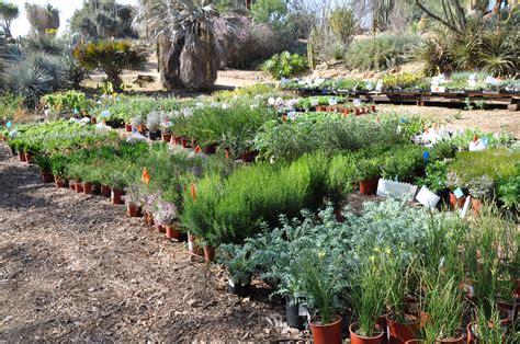 ucr today plant sale returns  uc riverside