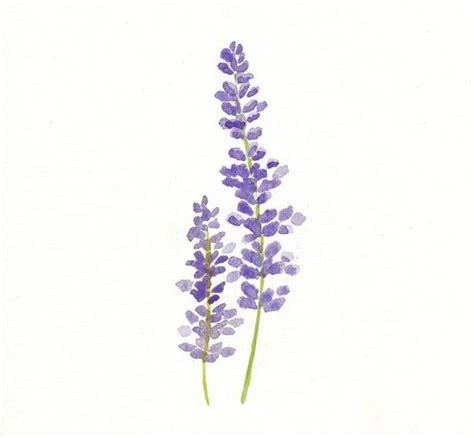 lavendar paint lavender watercolor print botanical art lavender art