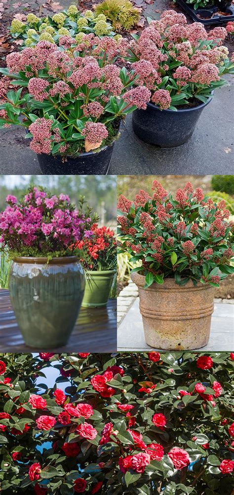 best flowers for small pots top 12 wonderful plants for small containers diys