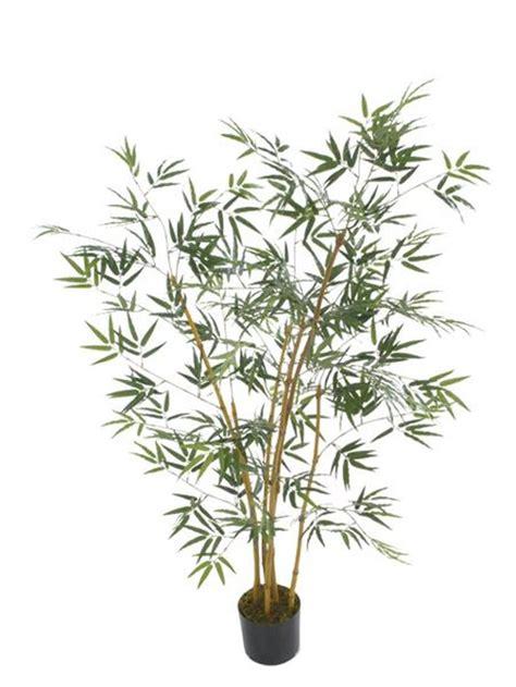Bambu Kuning Mini By Agrosegar tanaman bambu kuning mini update daftar harga terbaru