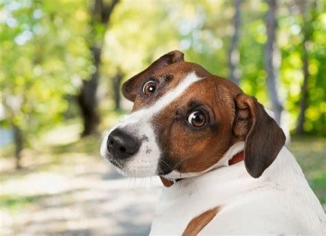 how much do puppy vaccinations cost how much do puppy injections cost uk 4k wallpapers